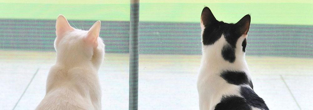文鳥の天敵の猫