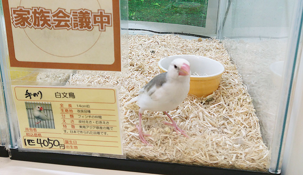 文鳥の値段