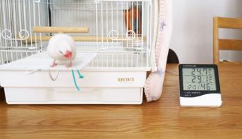 文鳥の適切な温度と湿度