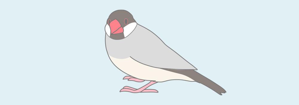 アゲイト文鳥