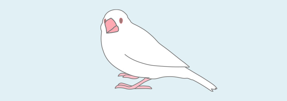 アルビノ文鳥