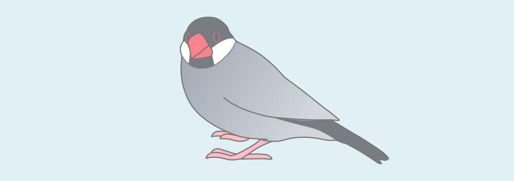 ブルー文鳥