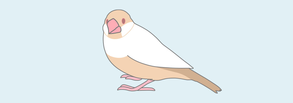 クリーム文鳥
