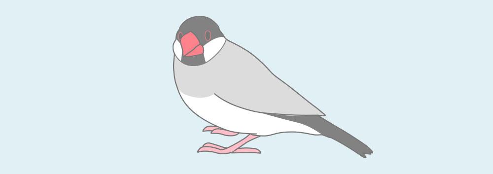 ノーマル文鳥