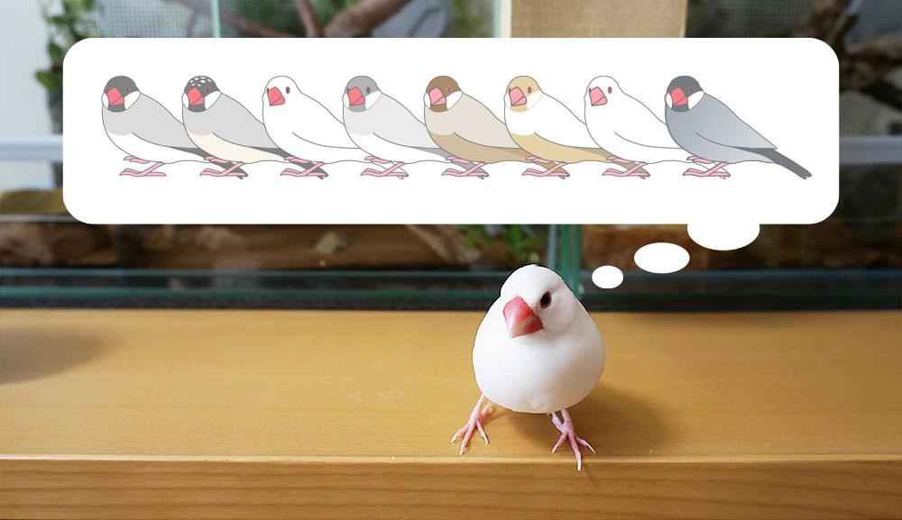 文鳥の種類